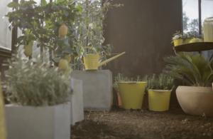 Cicas y limonero